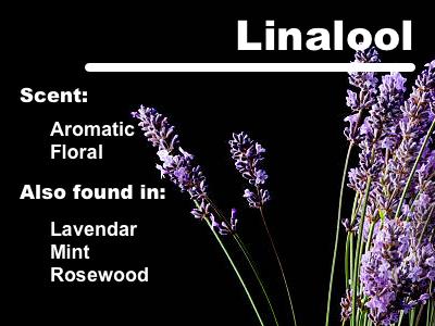 linalool info card